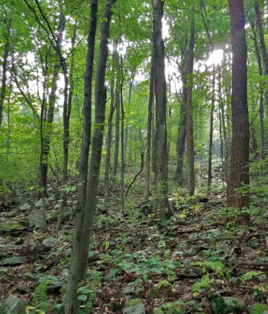 Eisenberger property woodland