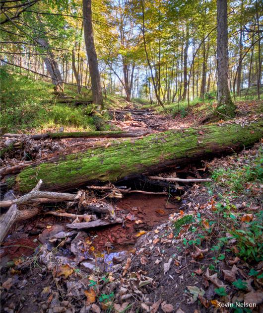 Frenchtown Preserve ravine