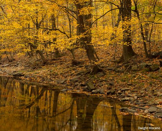 Zega Lockatong Preserve, Delaware Township, NJ