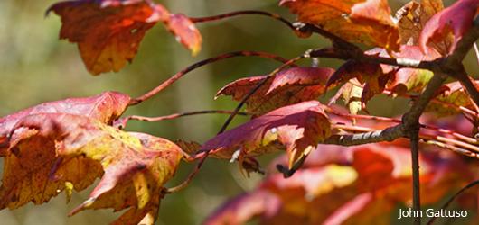 Muddy Run Preserve, autumn leaves
