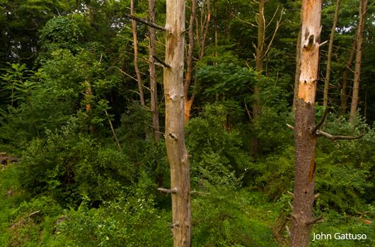 Idell Preserve, Hunterdon Land Trust