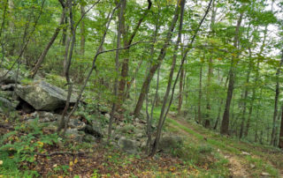 Hunterdon Land Trust open space