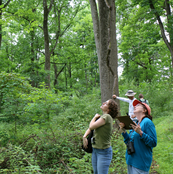 emerald ash borer survey, Lockatong Preserve, woodlands