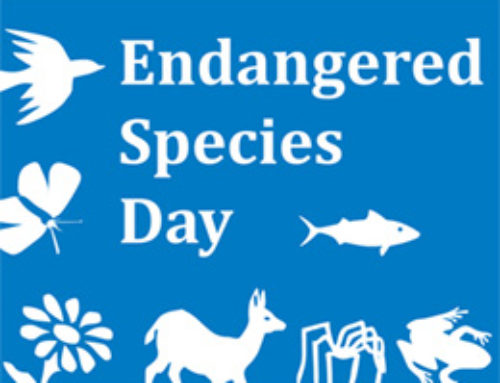 Celebrate Biodiversity on Endangered Species Day