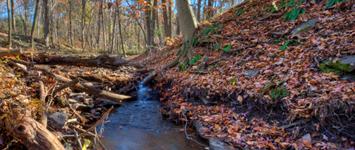 Horseshoe Bend Preserve, Kingwood Township, NJ