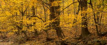 Zega Lockatong Preserve, Delaware Township